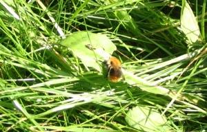 04-9-08 - Fuzzy bee